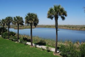 Beachtown wetlands